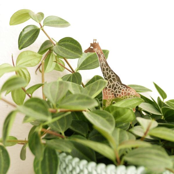 GIRAFFA. Animali esotici per piante in vaso | decorazioni per piante in acrilico oro | BiCA-Good Morning Design